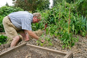 Richard checking the soil in a garden bed.
