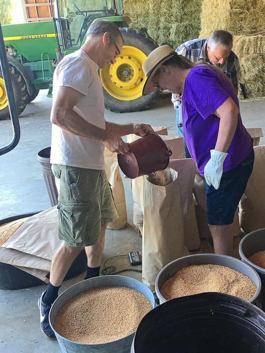 Bagging the grains.