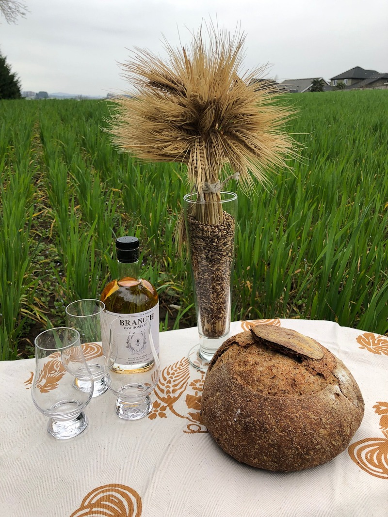 bread and rye in field
