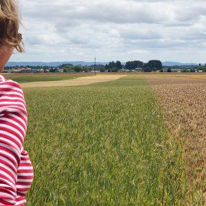Overlooking the field of rye.