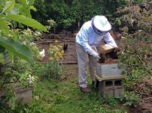 Richard tending the bees.